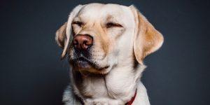 hondenbeleid