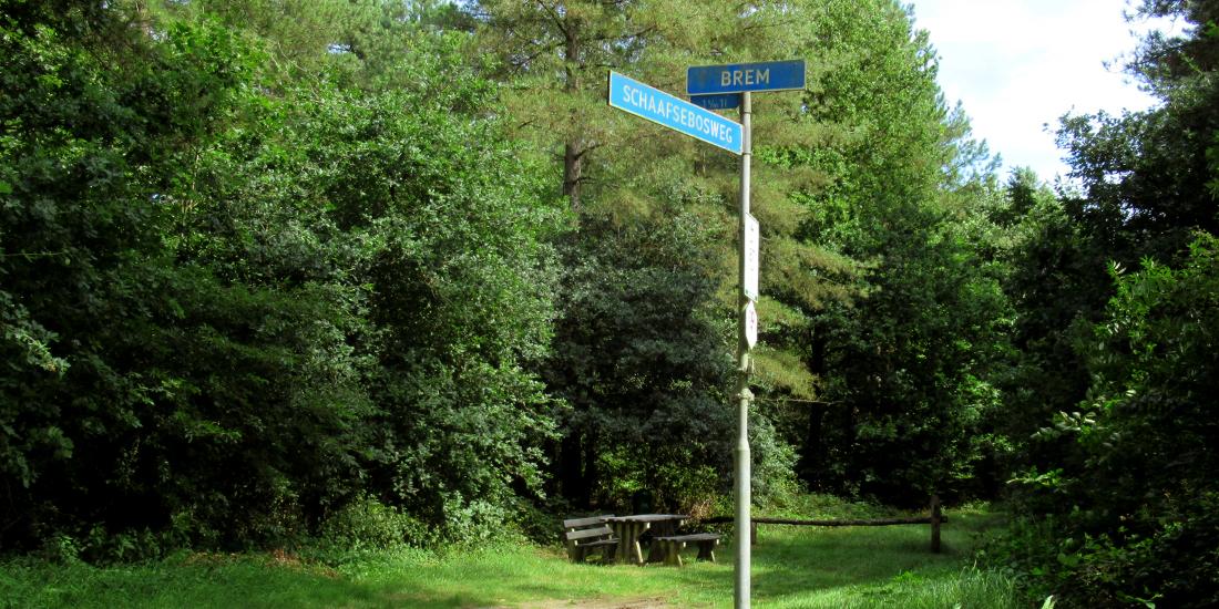 Schaafsebosweg in Heijen